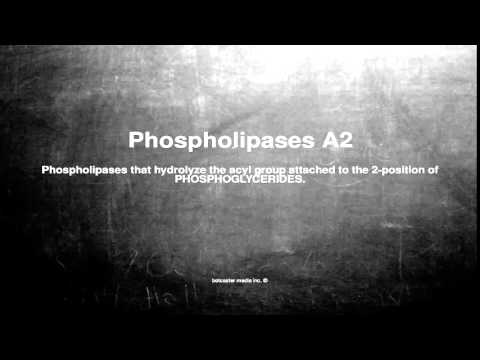 Medical vocabulary: What does Phospholipases A2 mean