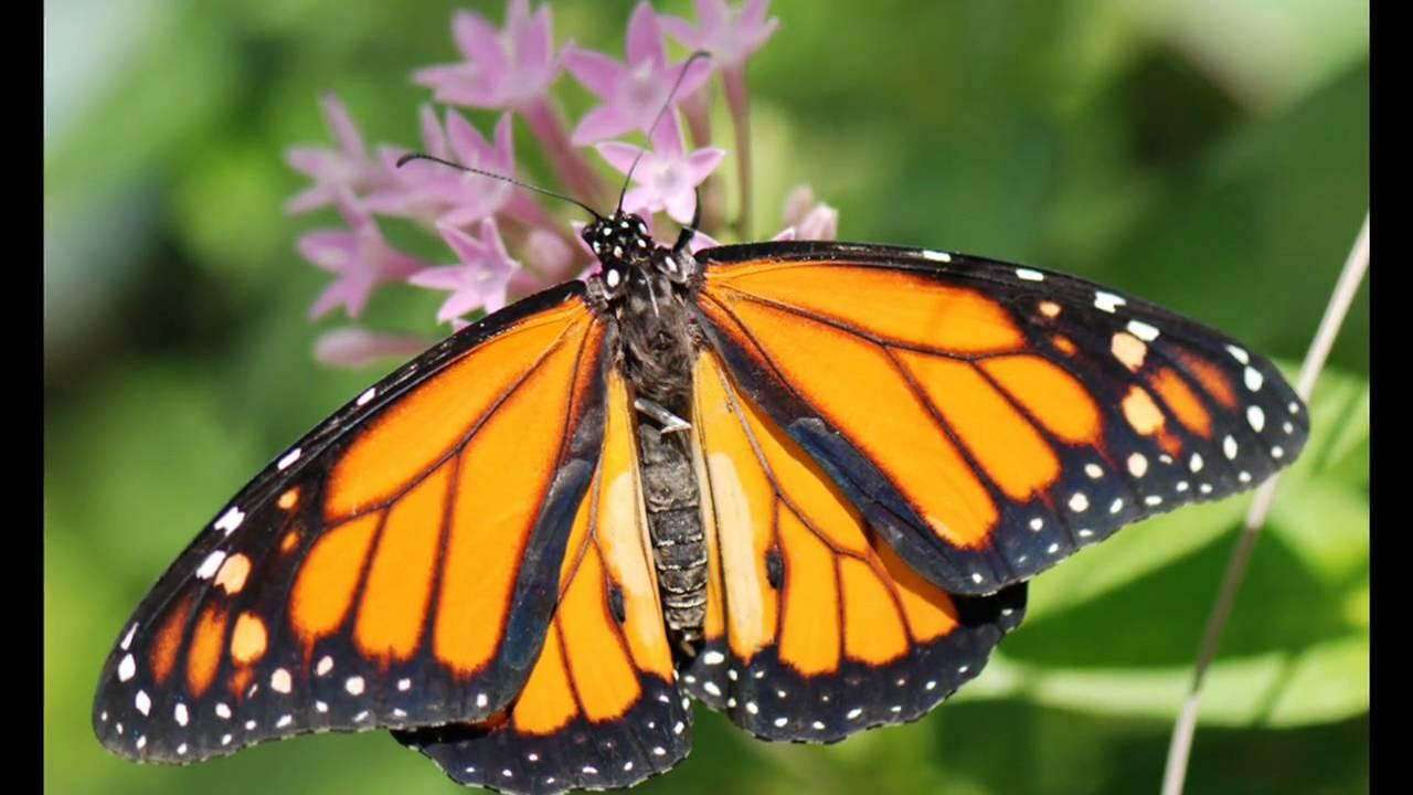 Butterfly Garden, MOSI