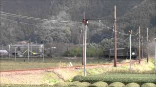 Electric Locomotive E101 running through Japanese Tea Farm 12/Mar/2016 大井川鐡道E101抜里茶畑を行く