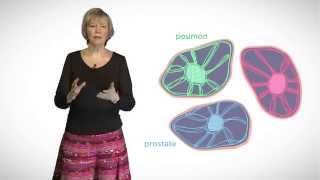 MOOC côté cours : Le cytosquelette et les filaments intermédiaires