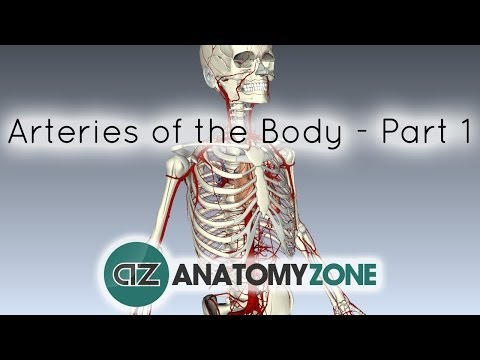 Arteries of the body - PART 1 - Anatomy Tutorial