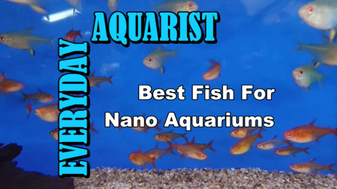 Small nano aquarium fish tank tropical - Best Fish For Nano Micro And Small Aquariums