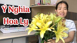 Gambar cover Ý Nghĩa Của Hoa Ly - Hoa Bách Hợp | Duong Nguyen Family