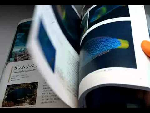 A Photographic Guide To WRASSES Of Japan Book Japanese Labridae Fish (0943)