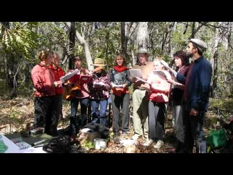 warrup forest song