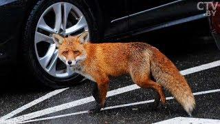 Дикие животные в городе: насколько они опасны?