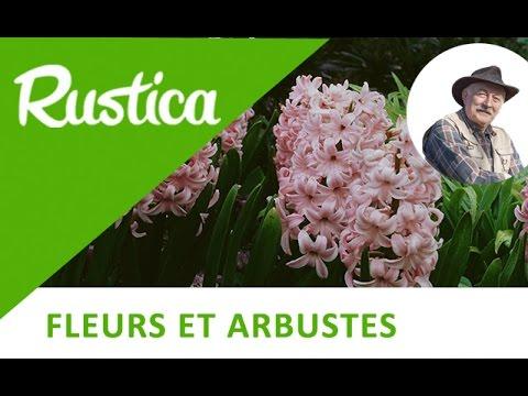 Comment Planter Un Bulbe De Jacinthe Youtube