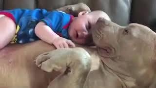 Собаки любят детей