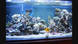 saltwater fish tank from Vietnam
