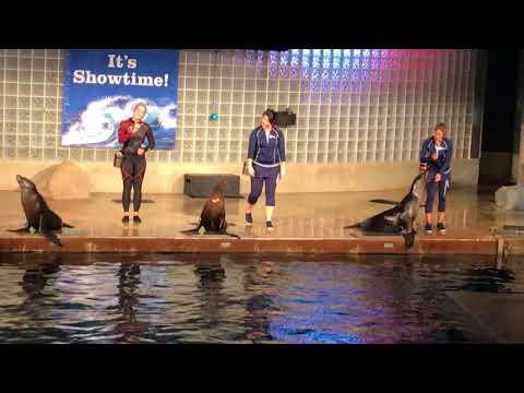 Mystic aquarium sea lion show 8/18/17