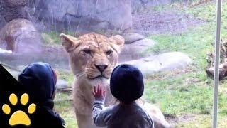 Dzieci W Zoo: Kompilacja