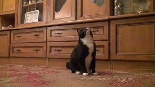 Усыпить кошку на дому Москва(http://miraved.ru/usypit-koshku-na-domu-moskva/   Каждый желающий может связаться с нами любым удобным способом, чтобы усыпить..., 2016-10-13T12:36:34.000Z)