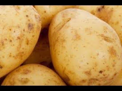 Modern Ways of potato cultivation - ಆಲೂಗಡ್ಡೆ ಕೃಷಿ