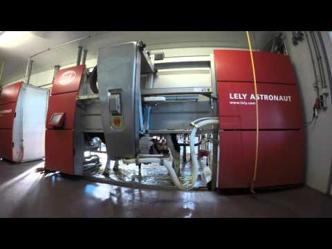 Automated cow milking machine