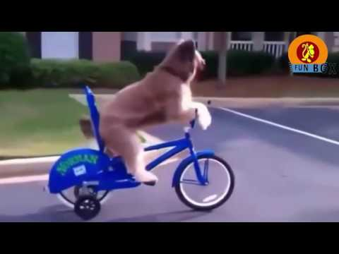 Best Funny Cats And Dogs Vines Compilation try not to laugh challenge
