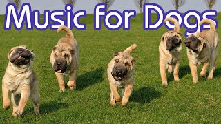 Music for Dogs: Combat Separation Anxiety INSTANTLY with Our New Music!