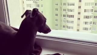 Клип про собаку