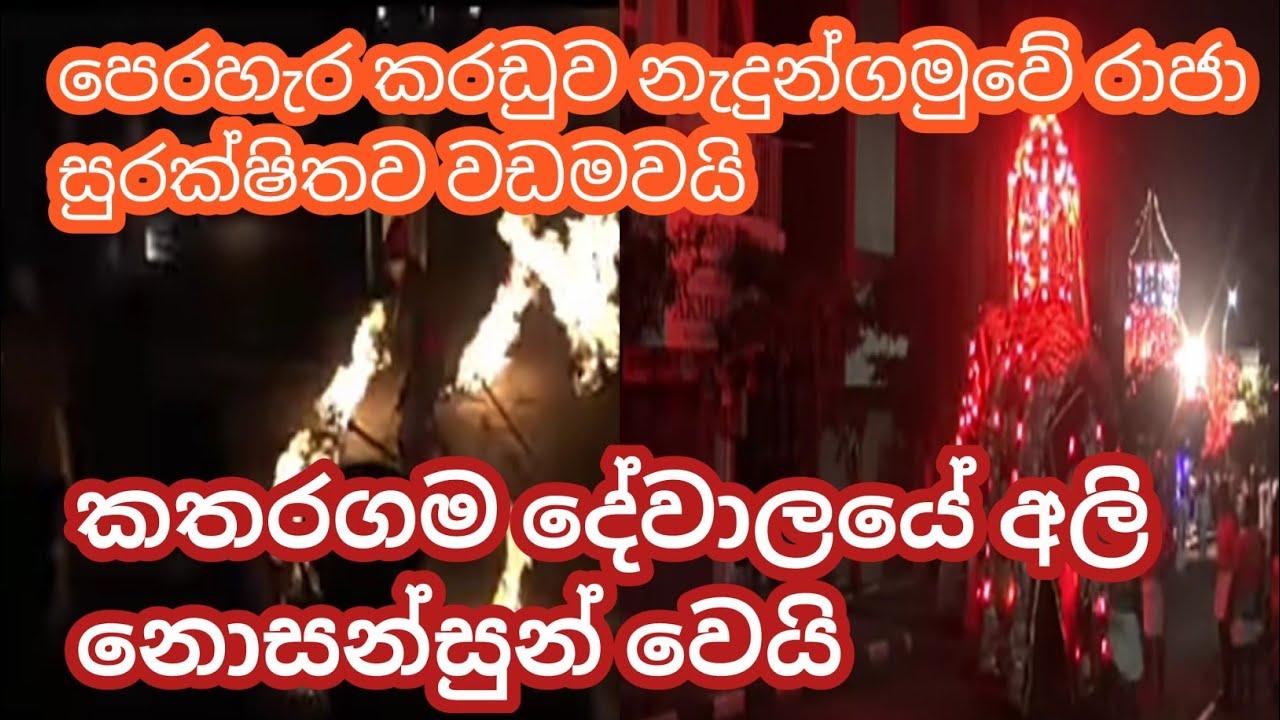 Download Elephant Commotion At Final Randoli Perahera 2021