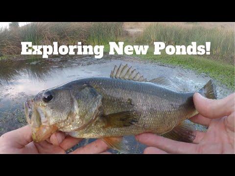 Secret Pond Fishing For Bass, San Jose CA