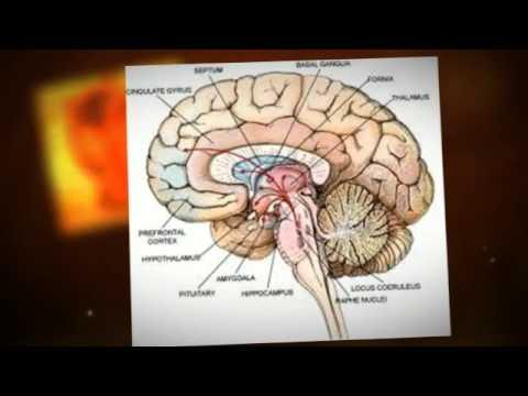Episodic Memory-Properties that Define the Memory