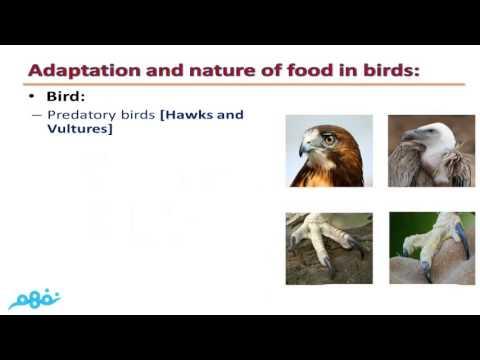 Adaptation and Diversity of Living Organisms - prep 1 - Term 1 - موقع نفهم - موقع نفهم