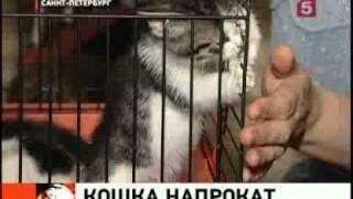 Кошки напрокат