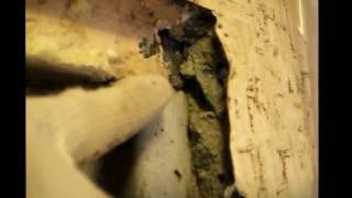 видео Входные двери в панельных домах