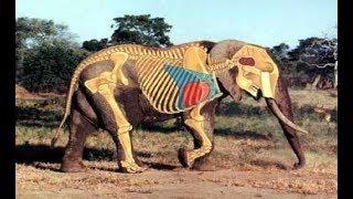 Animals Myths | Legends - Most Extreme Animals In The World