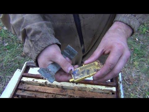 Как заменить пчеломатку