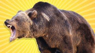 Türkiye'deki En Ölümcül 8 Hayvan