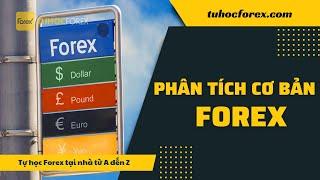 Forex Phần 6: Phân tích cơ bản forex là gì   Forex