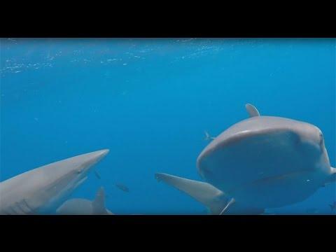 Galapagos Shark Diving