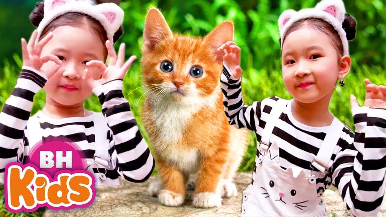 Chú Mèo Con Lông Trắng Tinh ♫ Chú Thỏ Con - Nhạc Thiếu Nhi Vui Nhộn Cho Trẻ Mầm Non