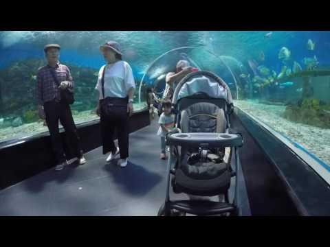 Baby G visits Ocean Park Manila