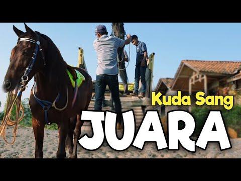 Penasaran!! Ngikutin Kuda Renggong Sang Juara Dari Kandang Hingga Tempat Pertunjukan