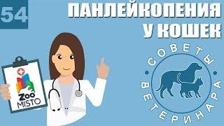 Панлейкопения у кошек | Какие симптомы панлейкопении | Профилактика болезни | Советы Ветеринара