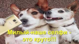 Приколы.фото про собак
