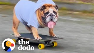 Bulldog Obsessed With His Skateboard Hates When His Parents Try To Take It Away From Him | The Dodo