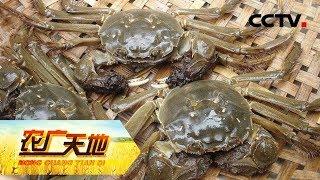 《农广天地》 20190603 矫健大闸蟹 跑道运动鱼| CCTV农业