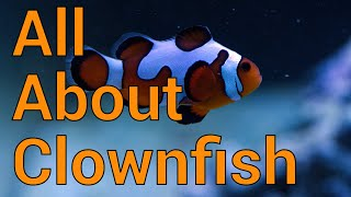 All About Clownfish - Care, History, Breeding and more in your reef tank