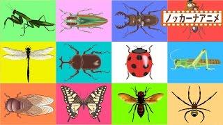 何が出るかな?昆虫★カブトムシ・クワガタ★子供向けアニメ★赤ちゃん笑う、喜ぶ、泣きやむ★Insects animation for kids thumbnail