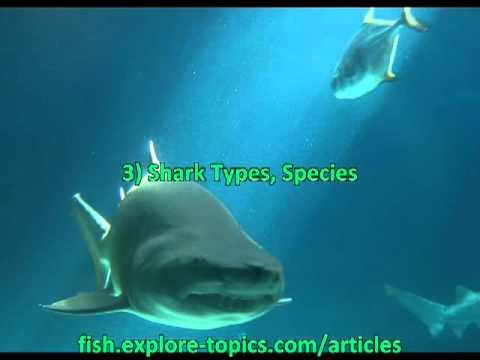 Information About Sharks - YouTube