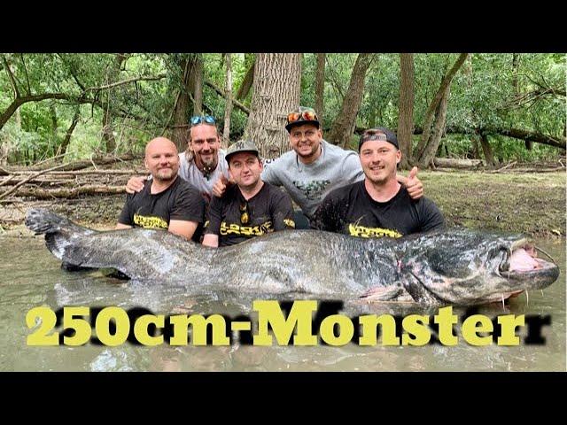 Rekord Wels aus Deutschland | Monster Catfish 8,20 Feet & 234 Pounds from German River