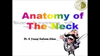 Deep Fascia of the Neck