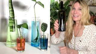 DO IT YOURSELF PROPAGATION CONTAINERS! | 6 EASY WEEKEND DIY CRAFT PROJECTS