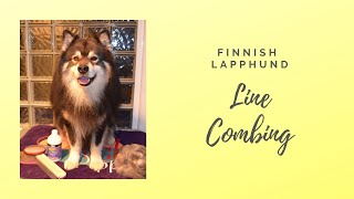 Line Combing your Finnish Lapphund