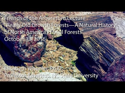 """Friends of the Arboretum Lecture - """"Really Old Growth Forests"""""""