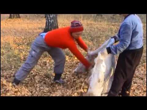 Как сделать землю рыхлой и мягкой на огороде