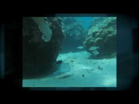 Myxer - Snorkeling Trip