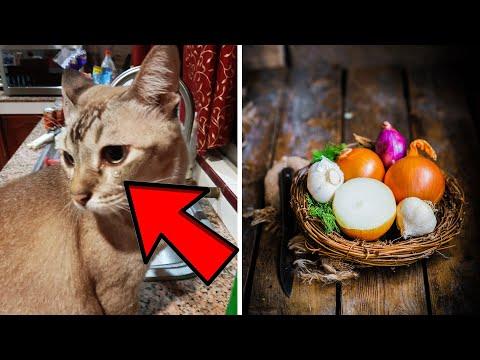 Pria tahan pipis, kandung kemih pecah; kucing menangis karena bawang - TomoNews Terbaru